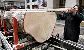Iveth Bowie carries a piece of lumber cut from the trunk of the annual Rockefeller Center Christmas tree that will be used in her own home. (© Richard Drew/AP)
