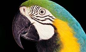 A Pittsburgh woman was without her parrot for a week after her lender wrongly started foreclosure proceedings on her home. (© Tom Brakefield/Getty Images)